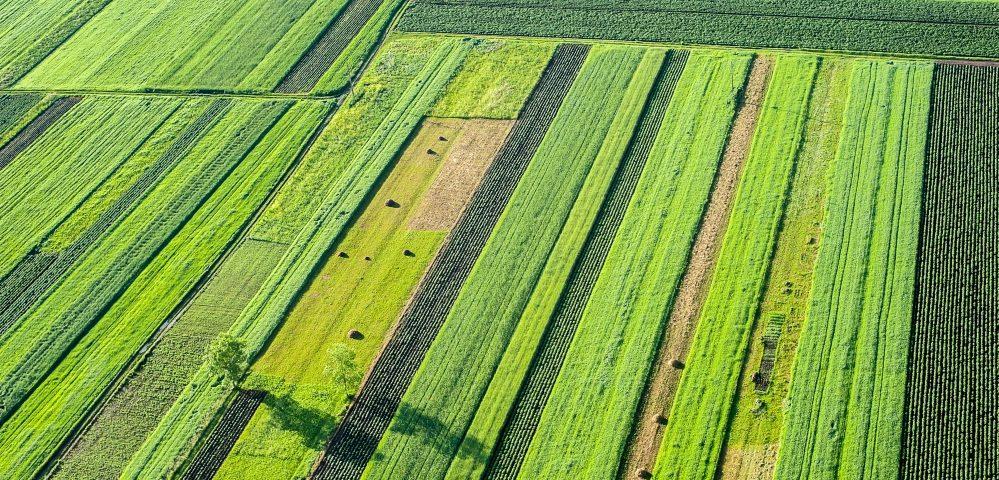 campos verdes de cultivo alinhados vertical e horizontal