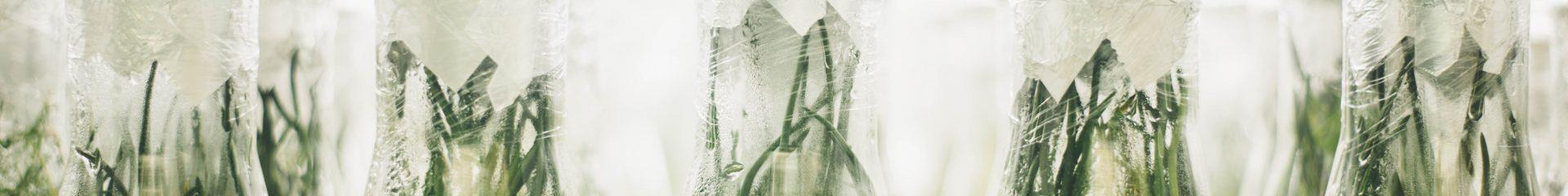 frascos de laboratório de plantas