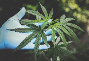 Portugal cannabis therapeutique