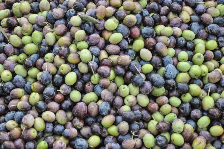 portuguese olives